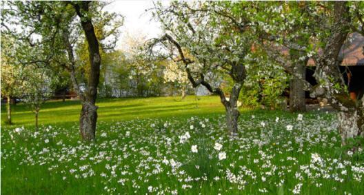 Emmental in full bloom