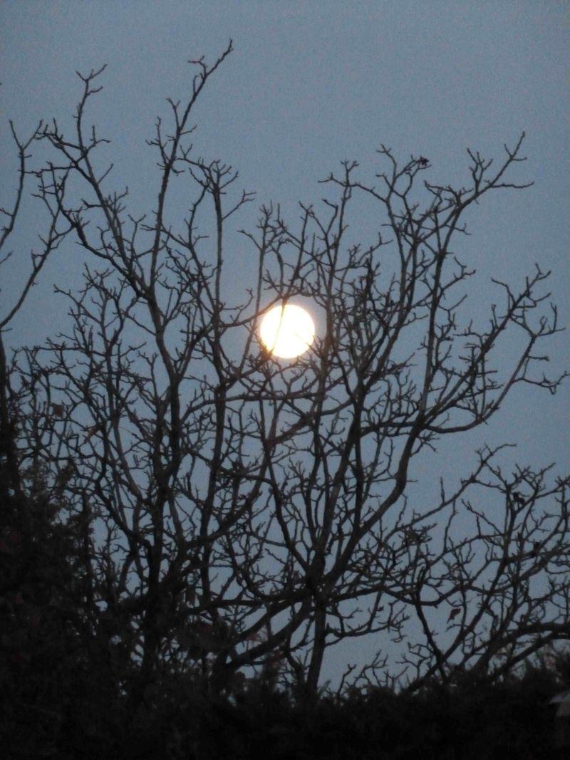 Morning_full_moon_2013-11