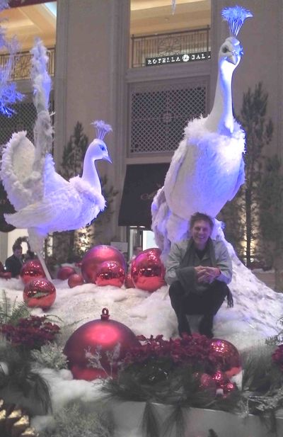 The big festive peacock