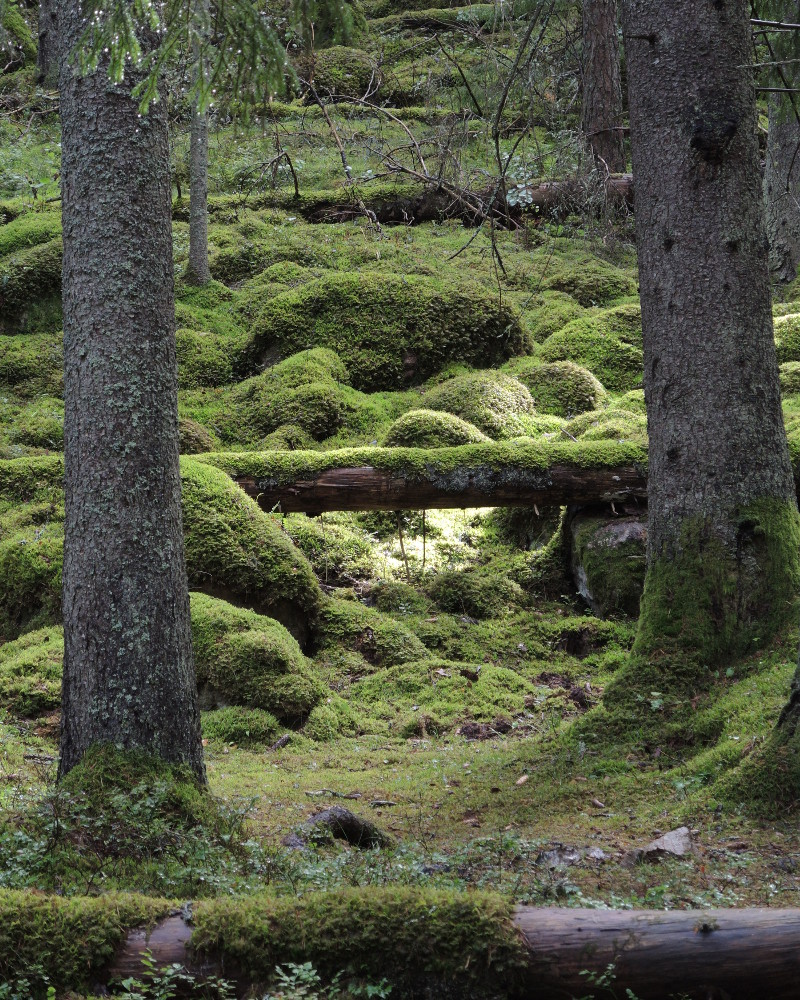 Mossy stones framed by trees