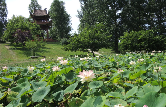Lotus pond and bell tower