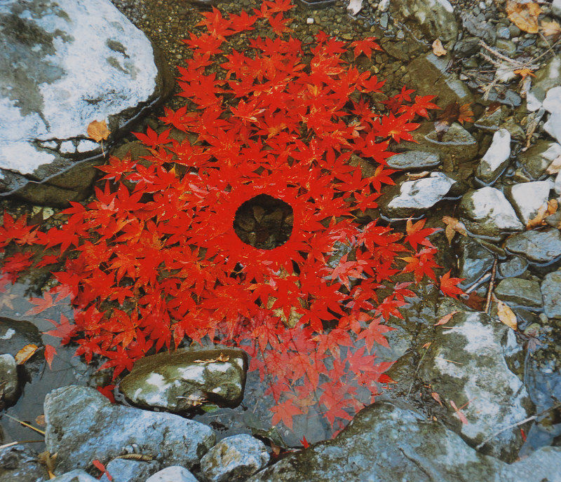 Transient nature art by Andy Goldsworthy
